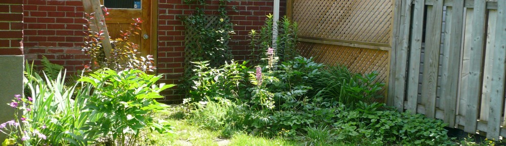 Cathy's garden